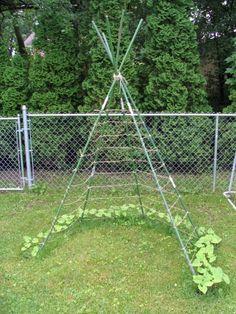 Garden ideas, grow a creeping  plant up a teepee!