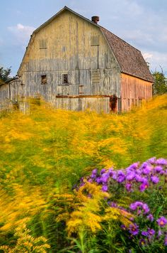 Rustic barn in a yellow meadow.