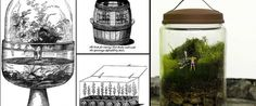 Small Plant Worlds: The History of Terrariums  http://kristenbaumlier.com/2012/08/01/small-plant-worlds-the-history-of-terrariums/#