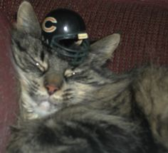 cat, kelsey