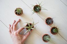 cactus houses, cacti, around the house, airplant, small kitchens, plants, gardens, minis, air plant
