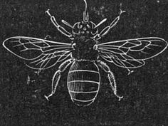 large collection of public domain printable images....Great inverted line drawing of a carpenter bee.