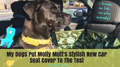 My Dogs Put Molly Mu