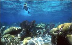 Belize's Great Barrier Reef