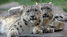 Brookfield Zoo - Chicago - Jim Schulz/Chicago Zoological Society.