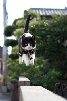 {levitating kitty}