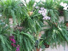 Hang clay flower pots anywhere...large pot of ferns and orchids held with hangapot hangers to create a living wall! Hangers  Made in America!  The hidden flower pot hanger  www.hangapot.com   Free shipping!  10 hangers for $29.95