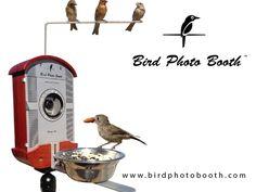Bird Photo Booth - Experience nature like never before. by Bryson Lovett, via Kickstarter.