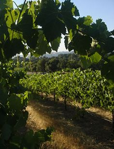 David Girard Vineyards ~ Placerville, CA