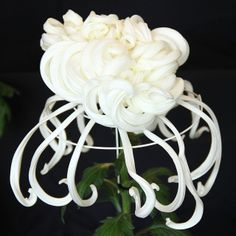 Japanese Chrysanthemum--brought to Japan by Buddhist monks in 400 AD. Became the imperial flower.