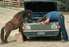 stop horsing around and hand me the wrench....