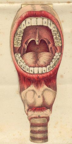Medical,illustration.