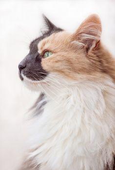 Love this cat's facial markings!