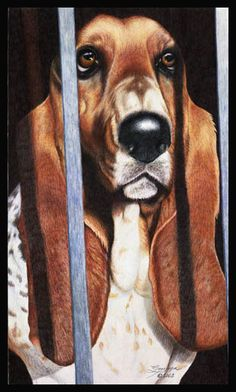 Bassett hound by wildlife and colored pencil artist Gemma Gylling
