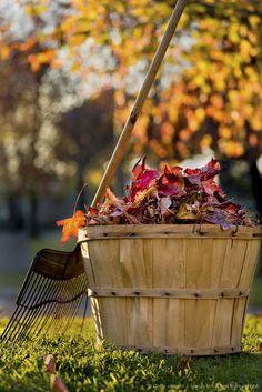 Ahhh, autumn! #fall #leaves