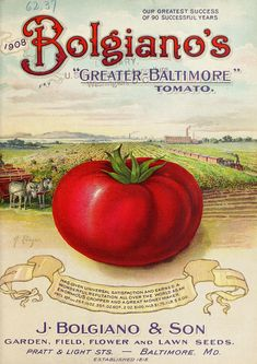 "Bolgiano's ""greater-Baltimore"" tomato"