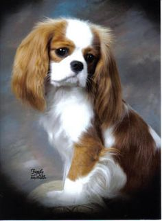 Cute Cavalier King Charles spaniel...OMG! MY FAVOURITE BREED OF DOG.  WHAT A FACE!..LB