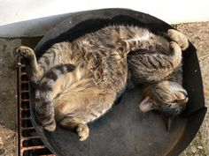 Awkward Cat Sleeping Positions. Chillin and grillin. Meow.