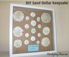 DIY Sand Dollar Keepsake