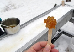 Nova Scotia Sugar Moon Farms maple on snow