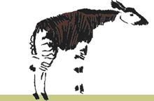 Repin our logo to help spread the word about The Okapi Conservation Project