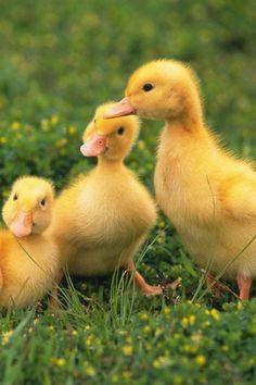 duckies!! :)