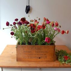 plant, wine crates, fresh flowers, wooden boxes, old crates