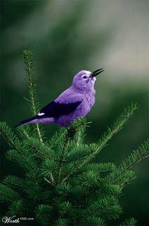purple bird on evergreen