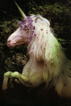 "Unicorn, from Robert Vavra's ""Unicorns I Have Known"". <3 <3 <3"