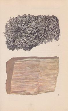 Vintage Print Rocks and Minerals Gypsum by PineandMain
