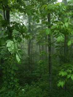North Carolina mountain forest by Krug6, via Flickr  green misted magic captured photo perfectly