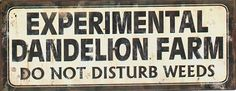 "Experimental Dandelion Farm-Do Not Disturb Weeds - Tin Sign for the ""casual"" garden... experiment dandelion, garden signs, dandelion farm, metals, farms, gardens, metal signs, disturb weed, weeds"