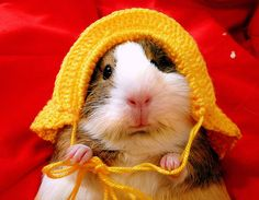 If only I could knitt. (and had a guinea pig)