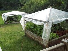 "Pinner Wrote: In the center of the gardens, we placed old used wooden patio umbrella frames (also salvaged) which we secured to the outer frame with wire. Plastic greenhouse grade sheeting was placed over the top and secured to the upper frame with strapping. At the base of each side ""wall"" we rolled the plastic around, and secured it to 8', 1"" x 2"" lumber scraps, added hooks and eyes, and voila!…our greenhouses."