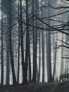 Spruce Trees in Fog, Great Spruce Head Island, Maine, August 20 Eliot Porter (American, 1901-1990)