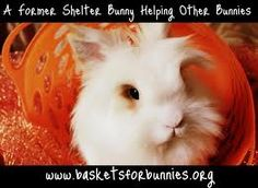 baskets for bunnies