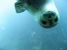 seal♥