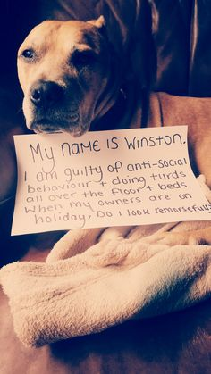 My name is Winston. I am guilty of anti-social behavior and doing turds all over the floor and beds when my owners are on holiday. Do i look...