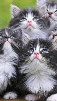 My daily dose of kittens....