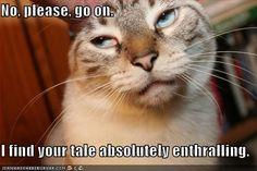 cats, anim, laugh, stuff, giggl