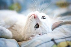 cats                .#cats #kitty #kitty_cats #kitteh #feline #pussy_cat