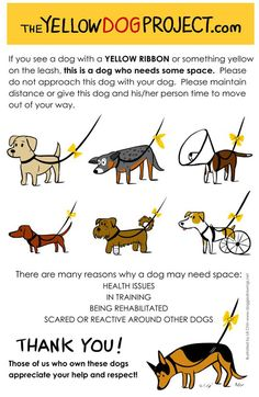 Yellow dog project, Spreading awareness…what does the yellow ribbon on the dog leash at the park mean?