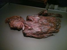 Bog bodies are kings sacrificed by Celts says expert