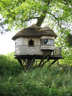 I never had a treehouse before!