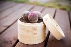 Dish gardening idea with Asian inspired Chinese Dim Sum.  Design By Better Landscape and Gardens, Roxanne Kim-Perez