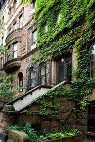 New York. www.myLusciousLife.com dreams, vines, dream homes, green, buildings, hous, ivy, new york city, place