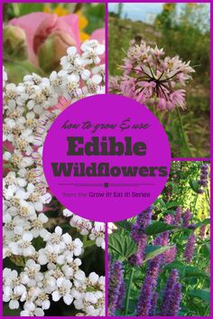 How to Grow and Use Edible Wildflowers from the Grow it! Eat it! Series