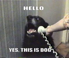 This is Dog....lol