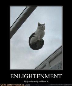 anim, cat, galleri, funni, joke, fur, funny photos, meme, enlighten