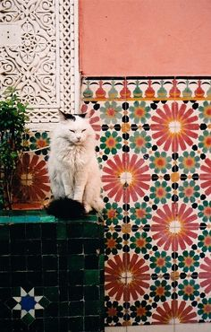 Mosaic and cat!